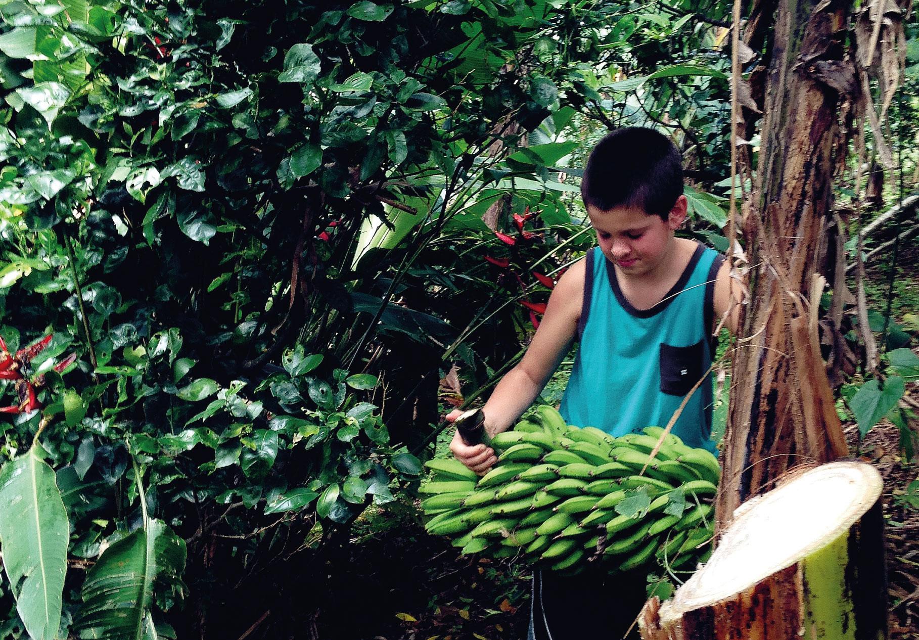 banane_header