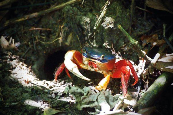Pause soleil pour ce crabe