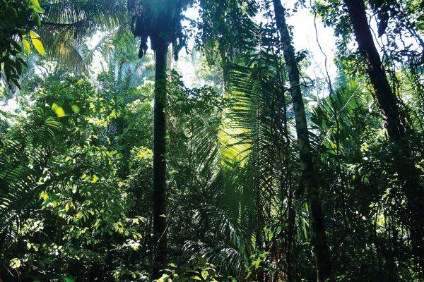 Les verts de la forêts tropicales