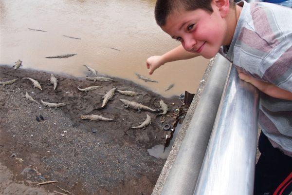 On essaie d'attraper des crocos...  Pas facile