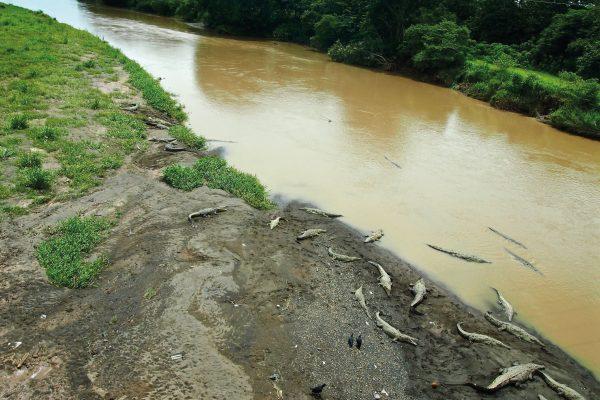 Rio de Tarcoles