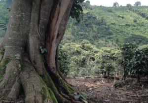 arbrespipasaweb